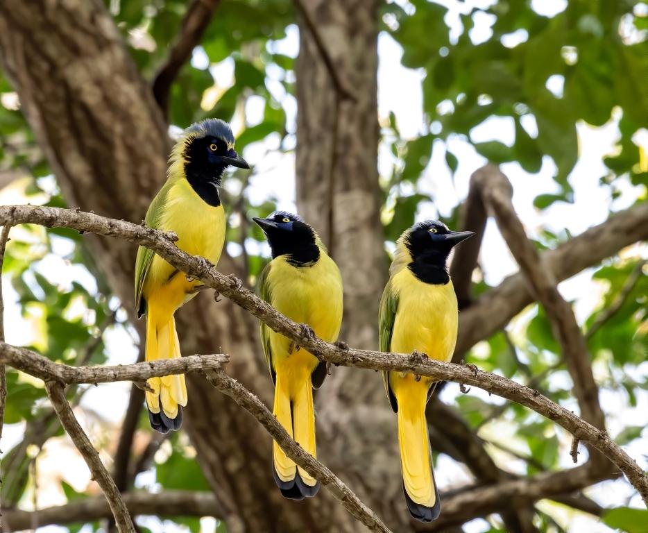 Festival de aves en Chiapas