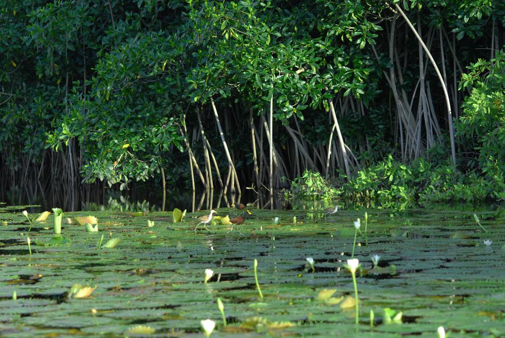 La Tovara, paraíso tropical