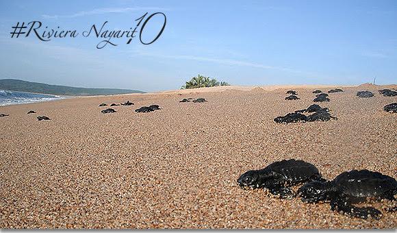 Top 10 Vida Salvaje en Riviera Nayarit