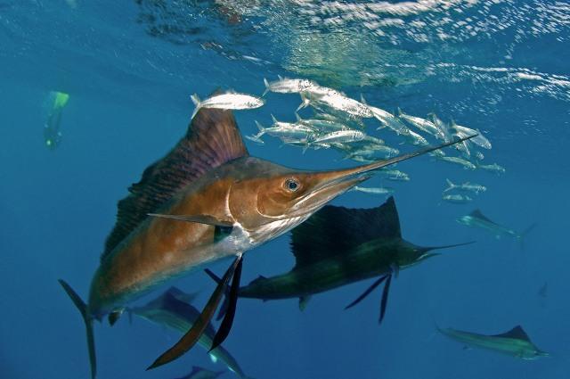 Torneo de pesca Bahía de la Paz